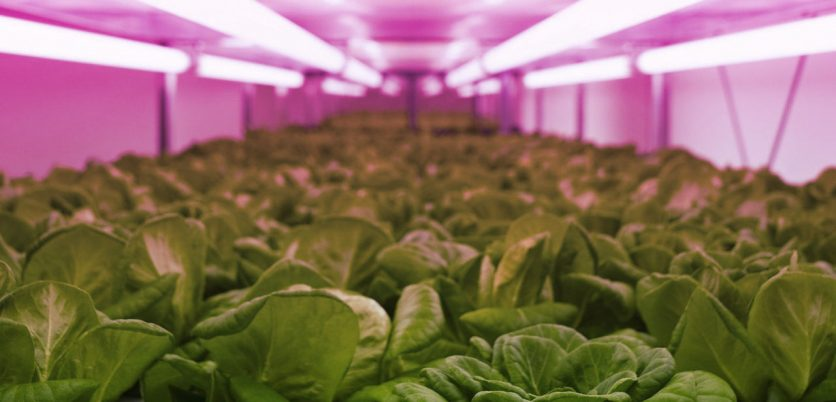 LED Lighting for professional Indoor horticulture