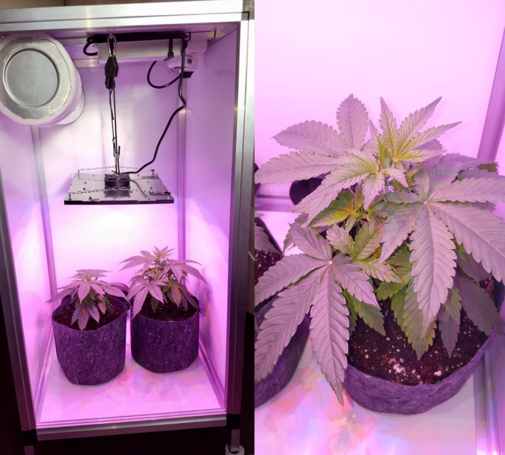 Medicinaal Cannabis