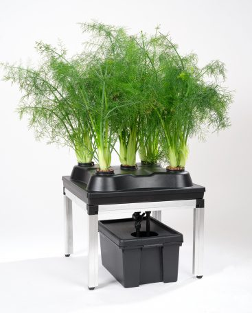 hydro grow system for 5 plants