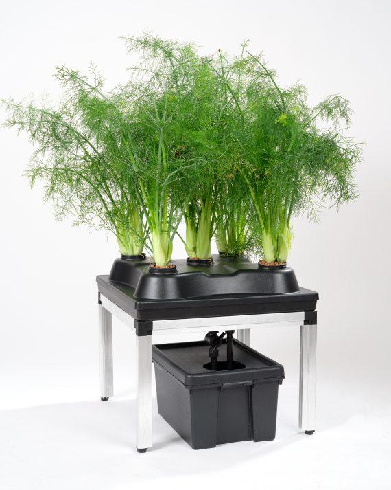 Hydrozucht-System fur 5 Pflanzen