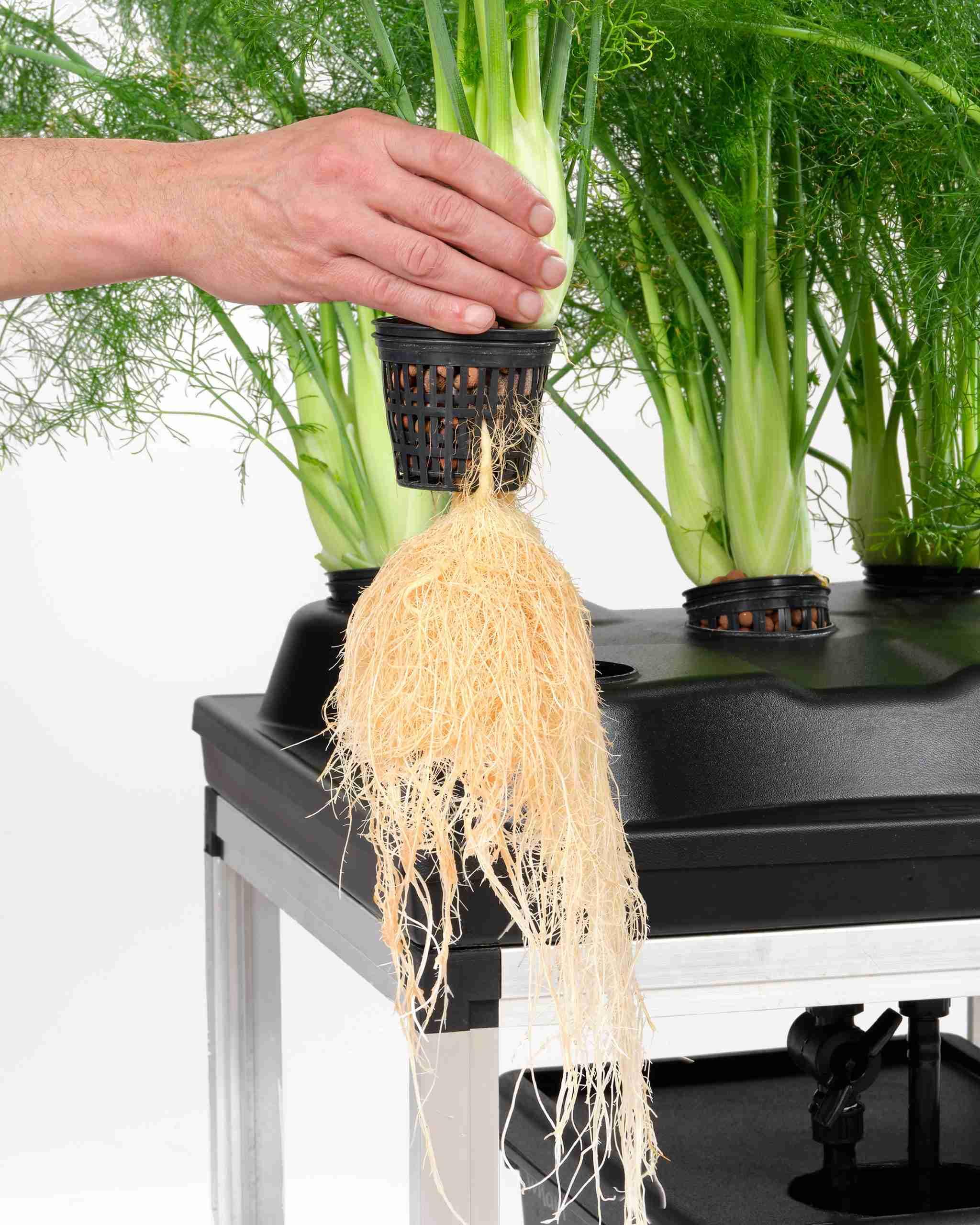 Anbau mit einem Bewässerungssystem