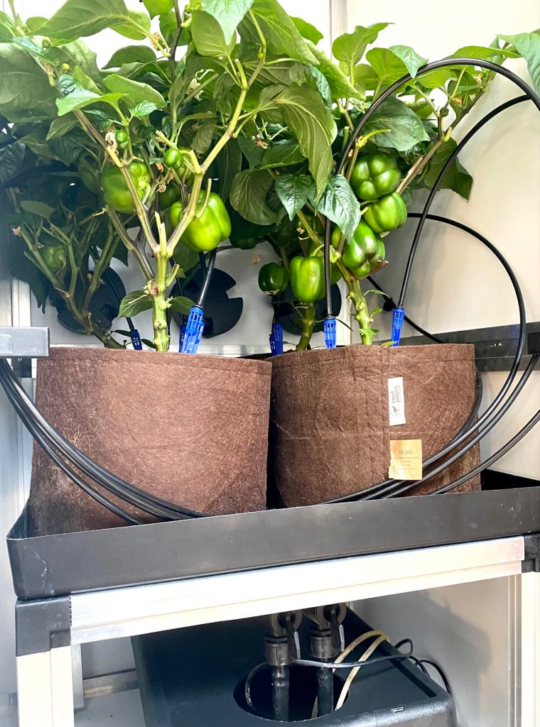 kweken met een irrigatiesysteem